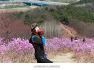 대구 가볼만한곳/대구 와룡산 진달래 군락지 : 봄봄봄♪ 【20년3월24일】