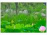 연밭의 개개비