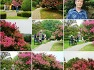 [부산여행]민주공원(중앙공원)의 배롱나무꽃