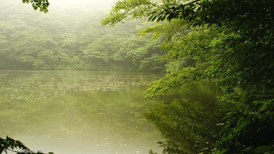 제주여행, 안개 자욱한 사려니숲길과 물찻오름