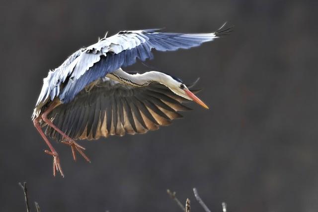 새들의 고향- 해오리기 를 찾아서